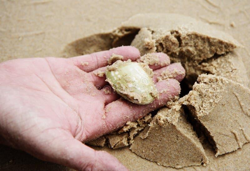 In hand shell van Pippi royalty-vrije stock foto's
