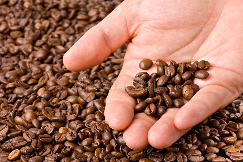Hand Showing Coffee Beans royalty free stock photography
