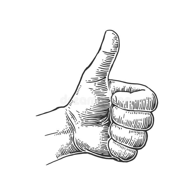 Hand showing symbol Like. Making thumb up gesture. Hand drawn design element. Vector black vintage engraved illustration on a white background. Sign for web vector illustration