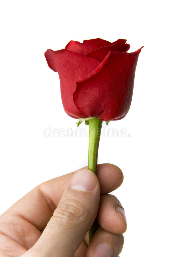 Hand With Single Red Rose Stock Photos