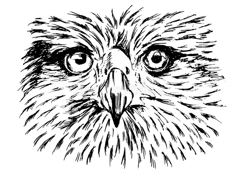 Hand sketch of detail eagle face royalty free illustration