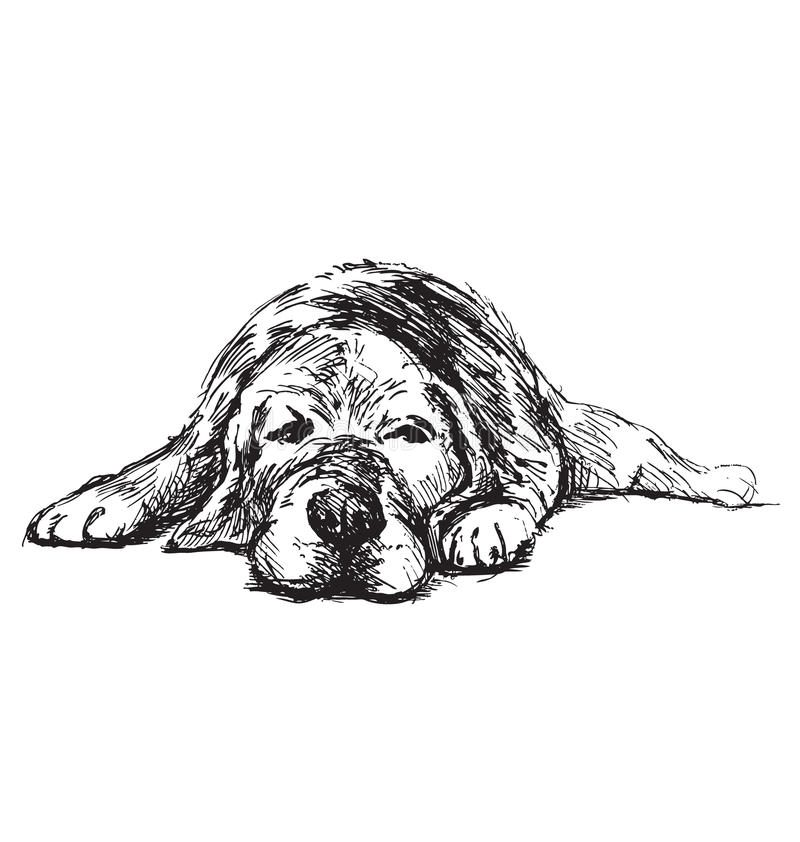 Hand sketch lying dog royalty free stock images