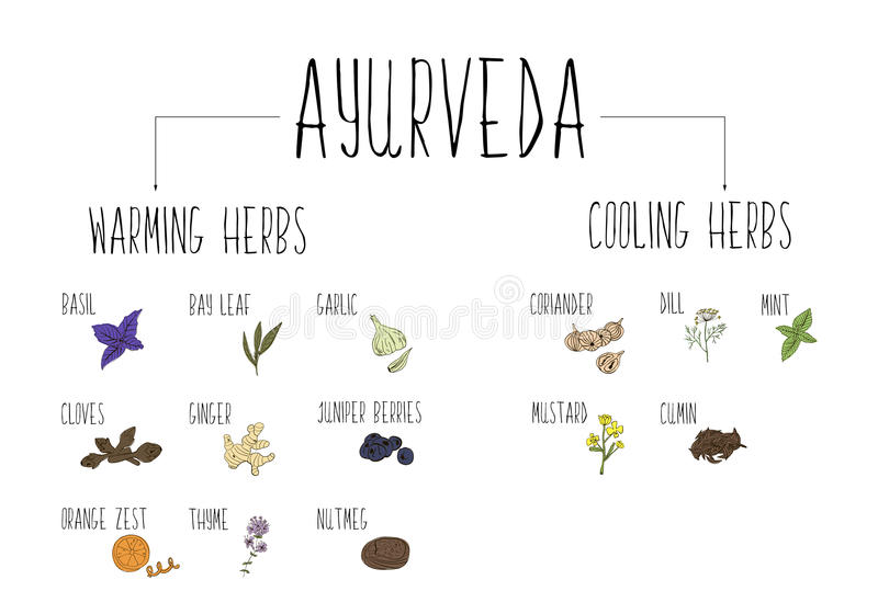 Hand-sketched collection of elements of Ayurvedic spices in our kitchen. Warming and cooling Herbs and supplements Ayurveda. Hand-sketched collection of vector illustration