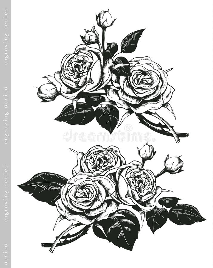 Hand sketched set of white roses in vintage engraving style. Baroque decorative elements. Floral doodles, leaves vector illustration