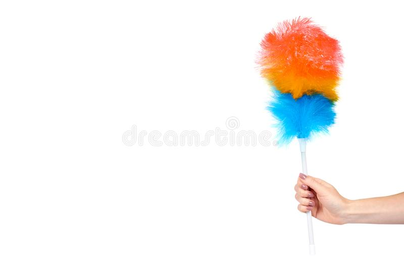 Hand with soft colorful duster, synthetic feather broom, fluffy cleaner. Isolated on white background. Copy space template brush domestic homework hygiene stock image