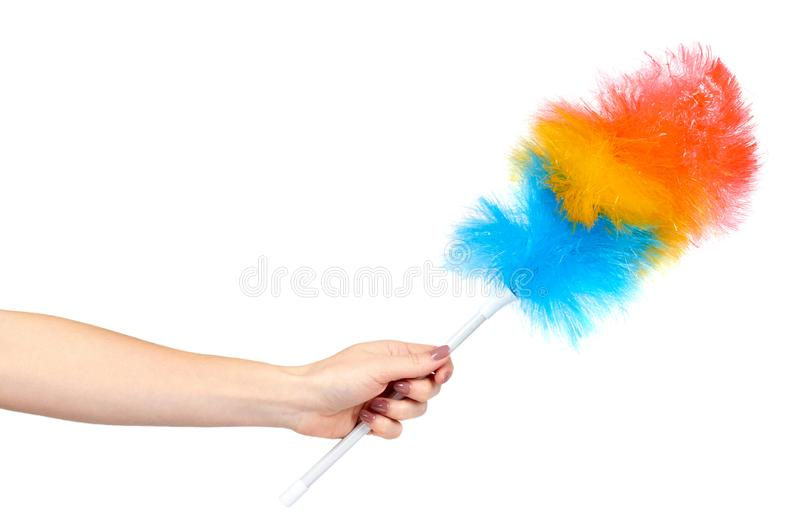 Hand with soft colorful duster, synthetic feather broom, fluffy cleaner. Isolated on white background brush domestic homework hygiene purity object plastic royalty free stock photo