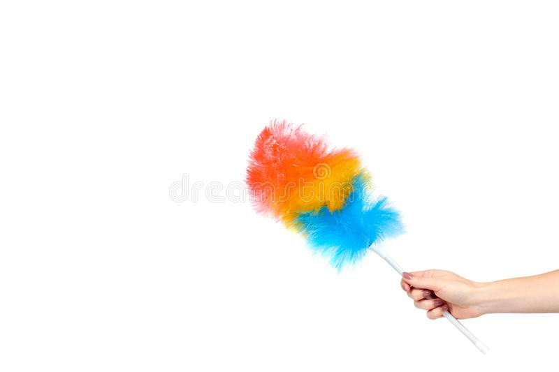 Hand with soft colorful duster, synthetic feather broom, fluffy cleaner. Isolated on white background. Copy space template, brush, domestic, homework, hygiene royalty free stock photography