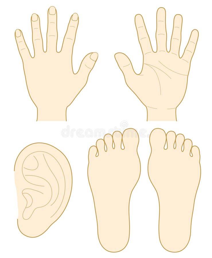 Download Hand, The Sole Of A Foot, Ear Stock Vector - Image: 26352531