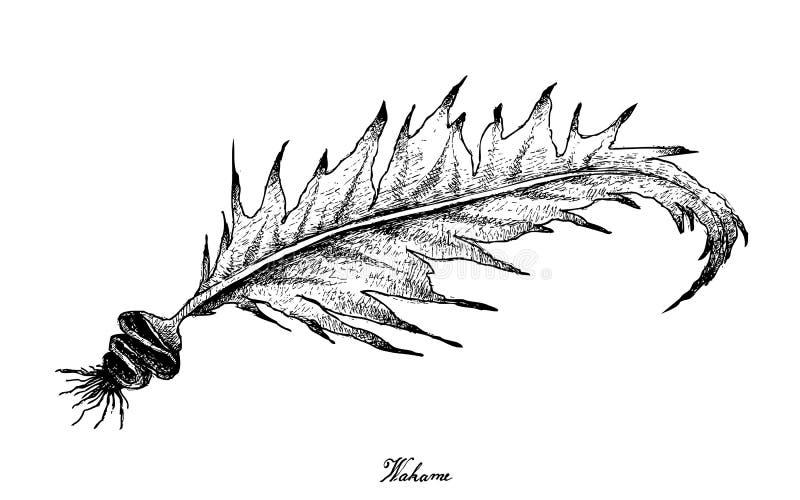 Hand som dras av Wakame havsväxt på vit bakgrund royaltyfri illustrationer