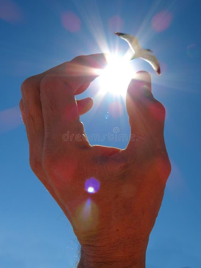 Hand som når för sol arkivfoto
