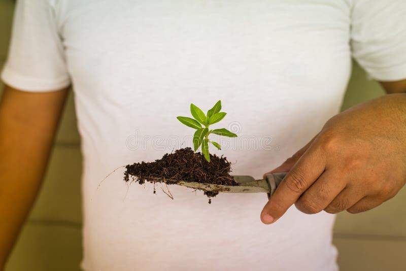 Hand som planterar det lilla trädet arkivbilder