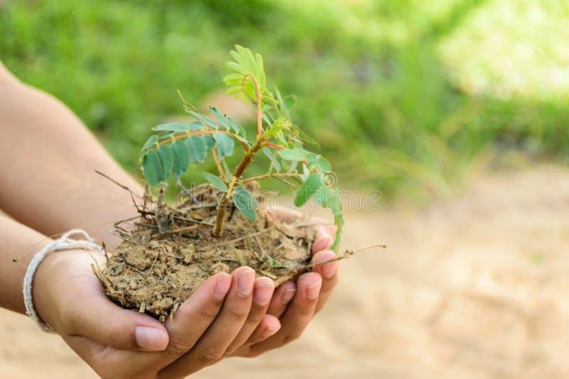 Hand som rymmer det lilla trädet royaltyfri foto