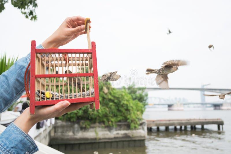 Hand som rymmer en fågelbur för befrielse arkivbilder