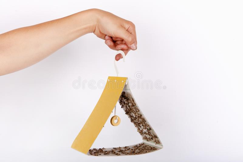 Hand som rymmer en gul fälla för triangelformmal full av fångade matmalar royaltyfria bilder