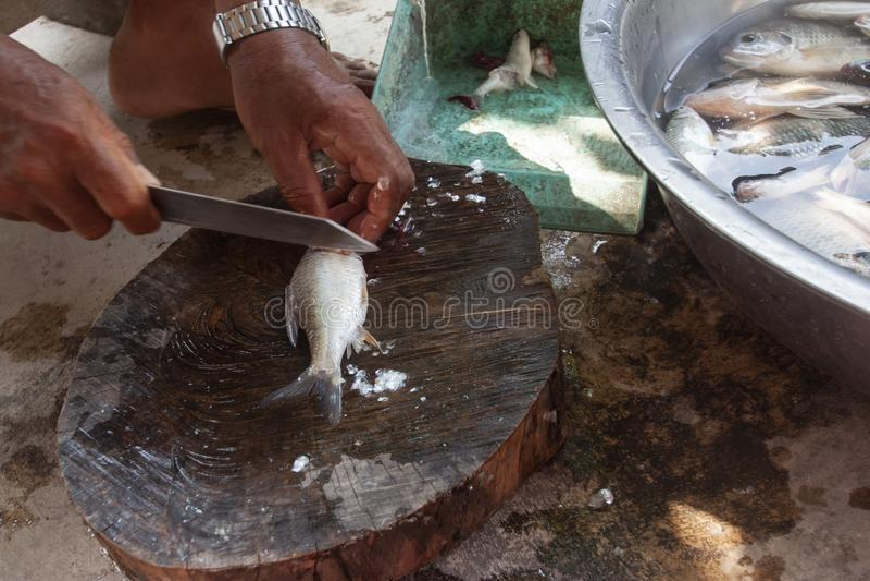 Hand som rymmer en kniv för vågfisk eller stucken pälsfisk på skärbrädan för att laga mat arkivbild