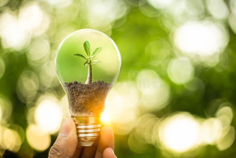 Hand som rymmer en lightbulb med tillväxt av trädet inom Idérika idéer för jorddag eller skydd av miljön Räddningenergi av royaltyfri fotografi
