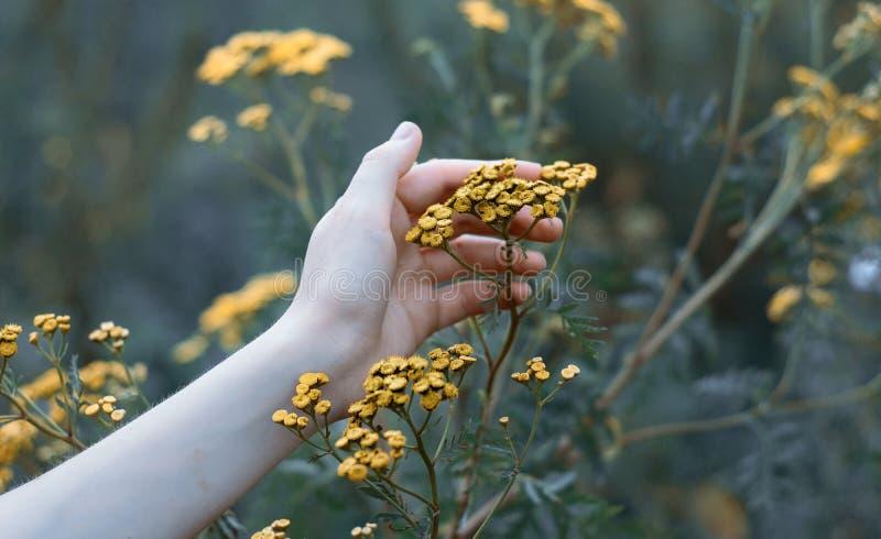 Hand som rymmer en växt arkivbilder