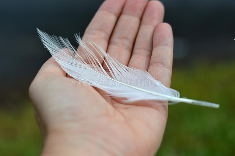 Hand som rymmer en vit fjäder arkivbilder