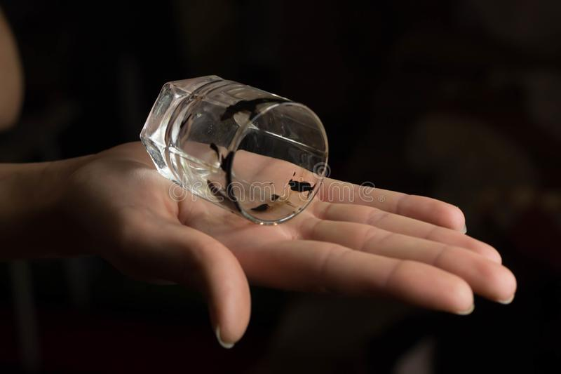 Hand som rymmer ett exponeringsglas på blackbackground royaltyfri fotografi
