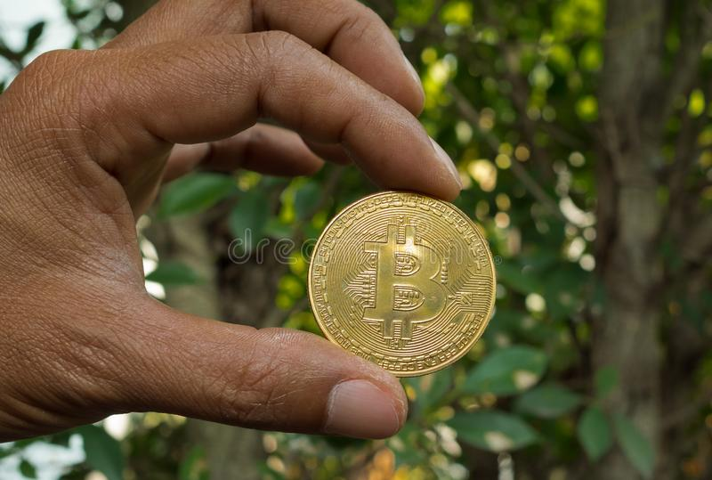 Hand som rymmer guld- Bitcoin trädbakgrund arkivfoton