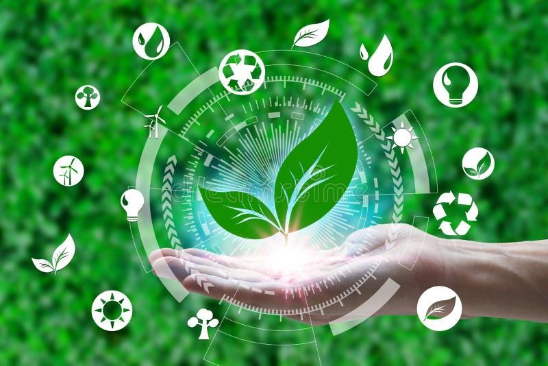 Hand som rymmer med blad- och miljösymboler över nätverksanslutningen på naturbakgrund, teknologiekologibegrepp royaltyfri bild