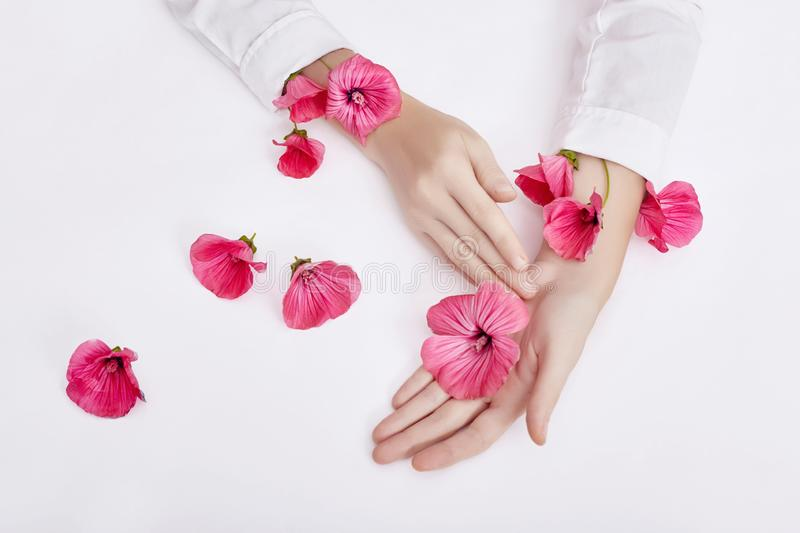 Hand and spring color flower are on table skincare. Nature Cosmetics for hand skin care, a means to reduce wrinkles on hands,. Moisturizing. Natural cosmetics royalty free stock photo