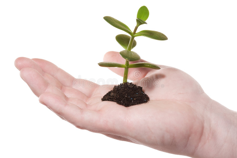 Hand,sprout Stock Image