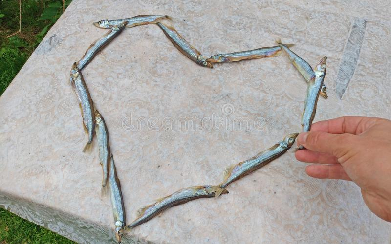 The hand takes the fish. Heart of food. Heart of capelin fish. Creation.  royalty free stock photos