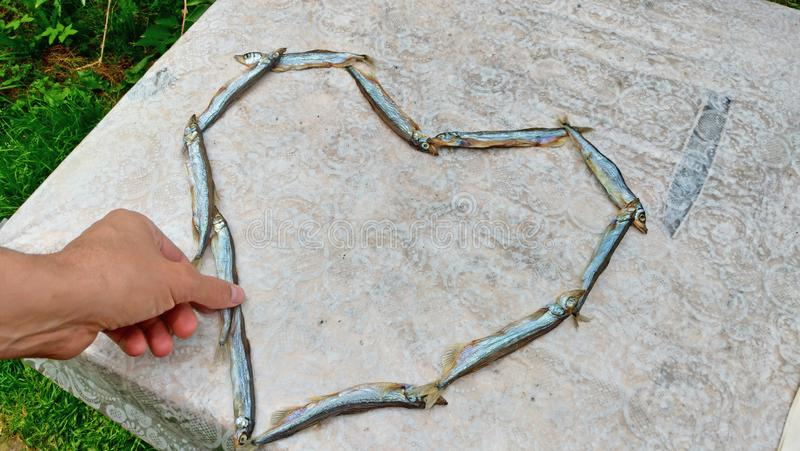 The hand takes the fish. Heart of food. Heart of capelin fish. Creation.  stock image