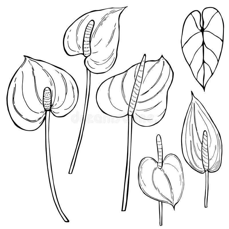 Hand tecknade tropiska blommor Anthurium Vektorn skissar illustrationen stock illustrationer