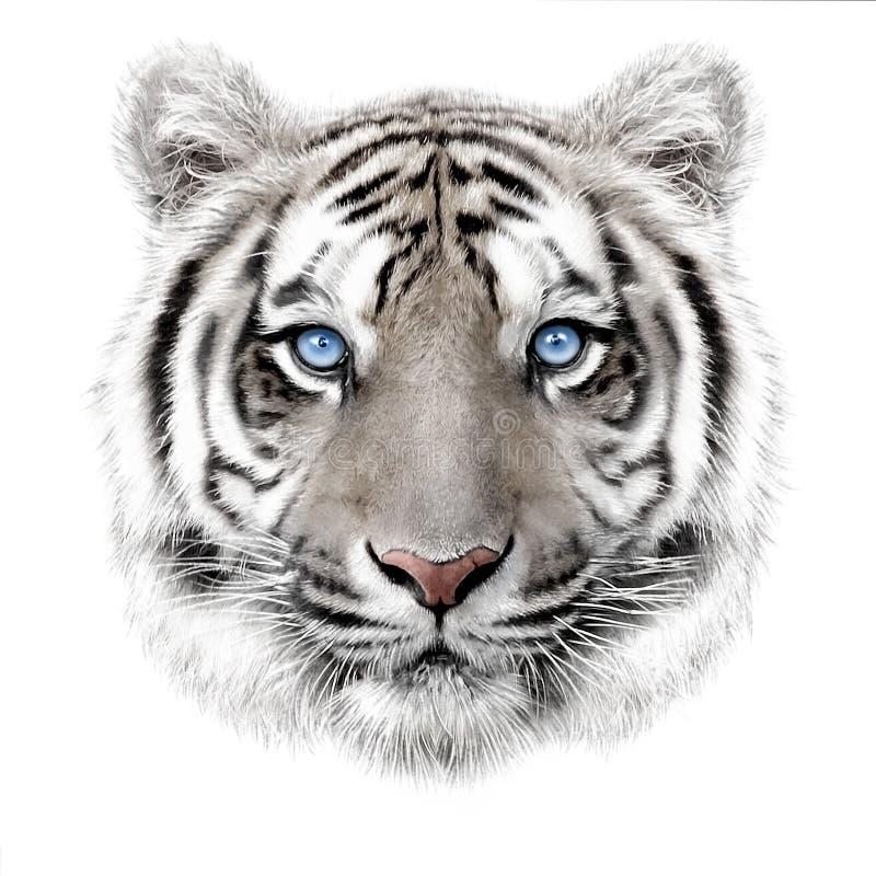 Hand-teckning stående av en vit bengal tiger royaltyfri illustrationer