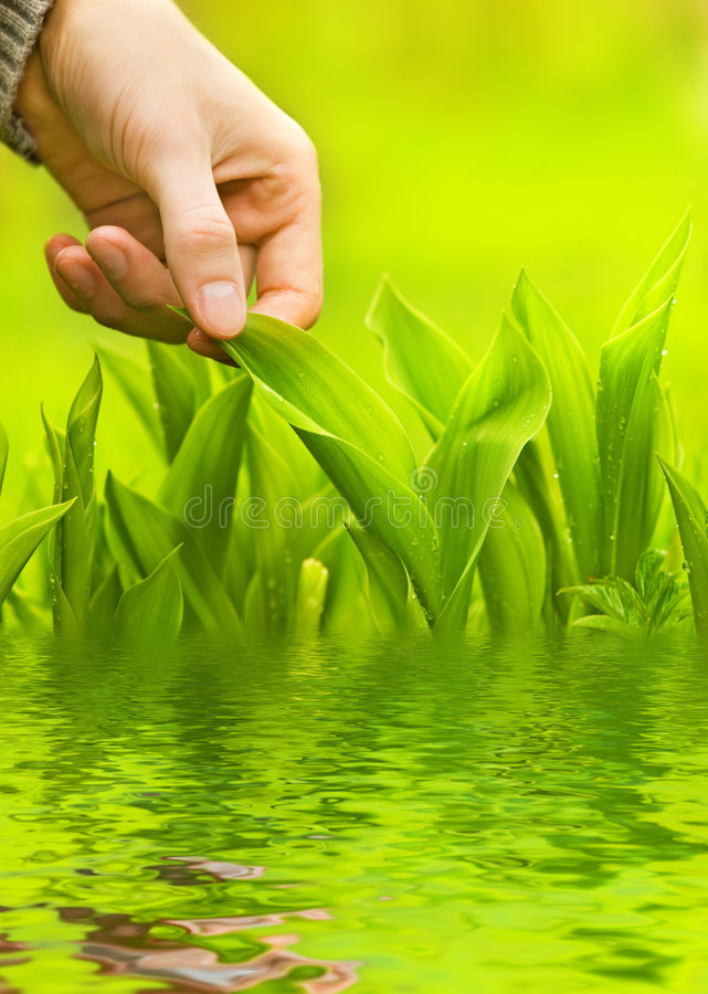 Hand touching green grass royalty free stock photo