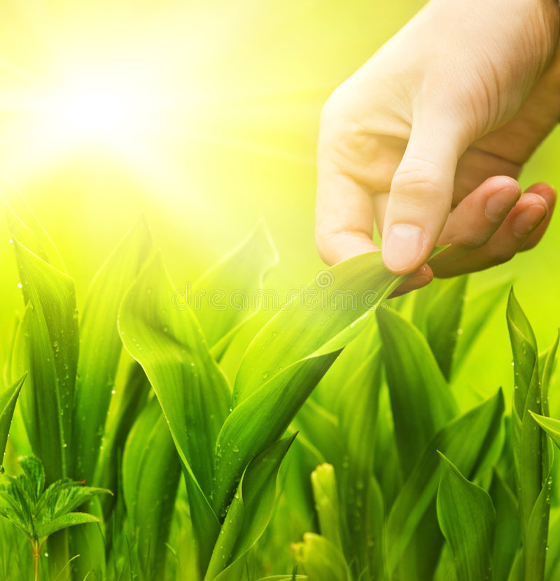 Hand touching green grass stock image
