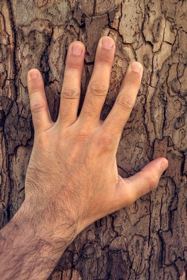 Free Hand Touching Maple Tree Royalty Free Stock Photos - 91724278