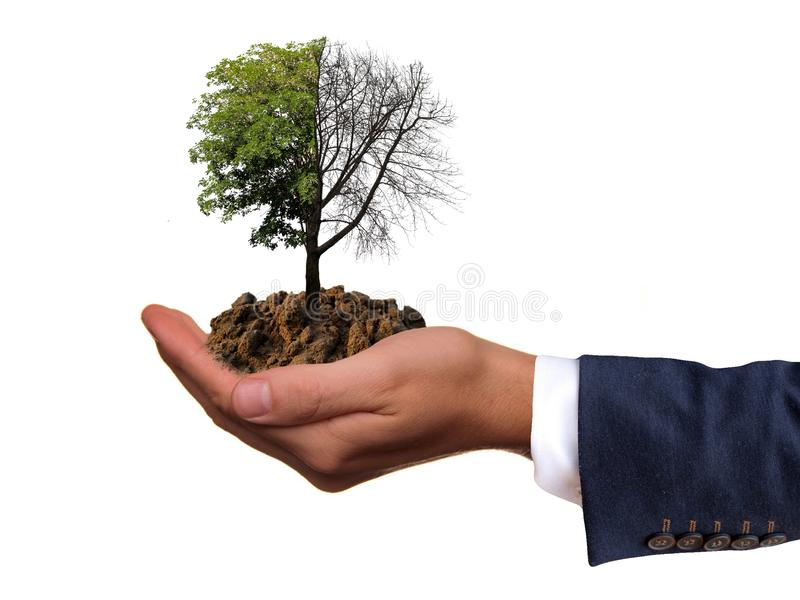 Hand with tree half bald half green. Isolated on white background royalty free stock photography