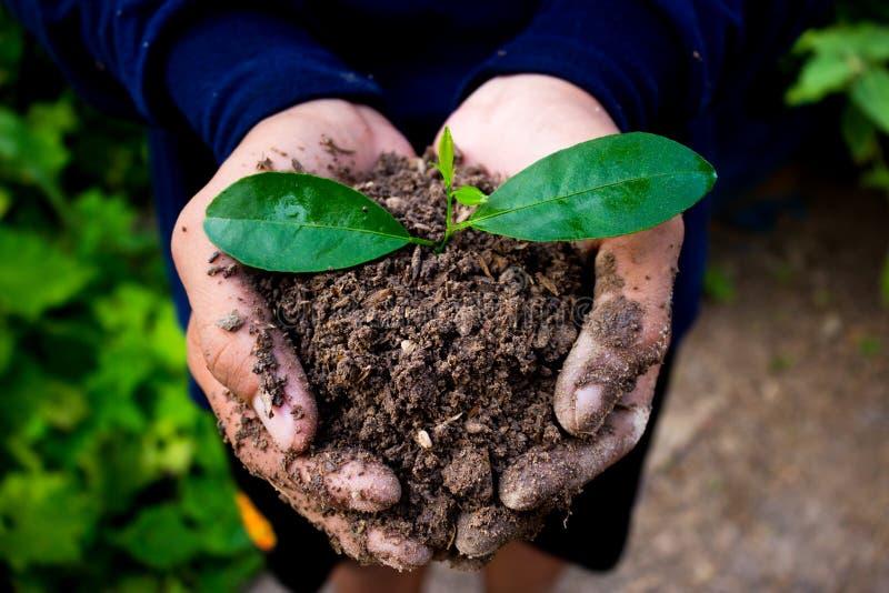 Hand for tree planting. Hand for tree planting concept stock photo