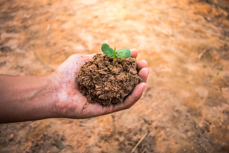 Hand for tree planting. Hand for tree planting, Concept afforest stock photo