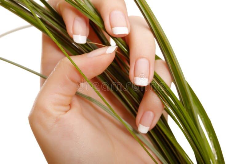 Hand und Gras stockfotos