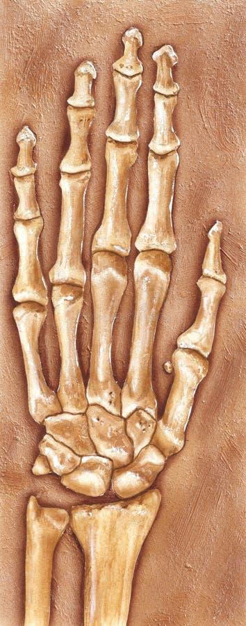 Hand und Handgelenk - begraben im Schmutz und ausgegraben lizenzfreies stockbild