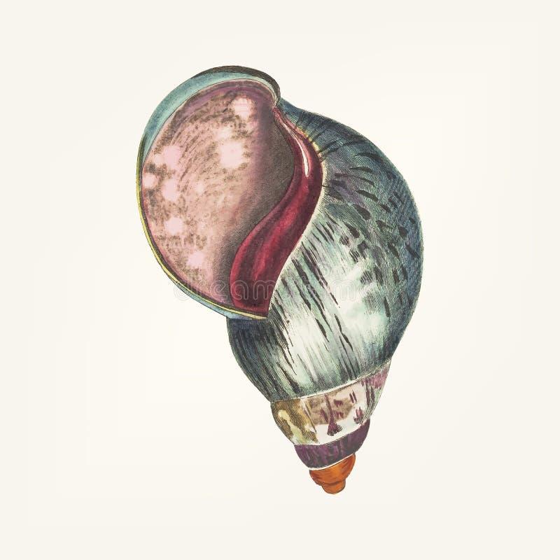 Hand van agaatbulla die wordt getrokken vector illustratie