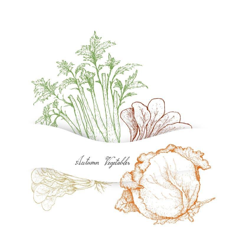 Hand van Autumn Vegetables, Selderie en Kolen wordt getrokken die vector illustratie
