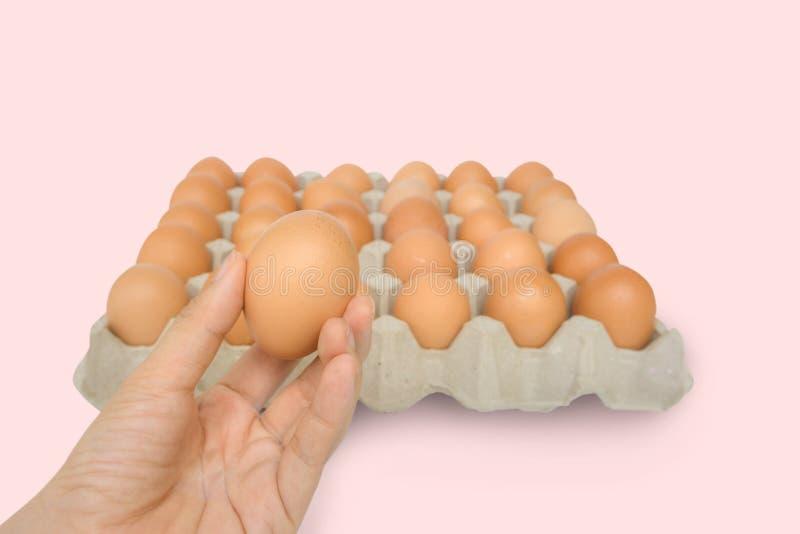 Hand van de close-up houdt de jonge vrouw een vers en ruw bruin kippenei, eidoos als mooie achtergrond Organische Eieren Natuurli royalty-vrije stock fotografie