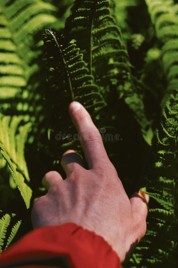 Hand van een persoon op mooie groene bladeren in een bos stock afbeelding