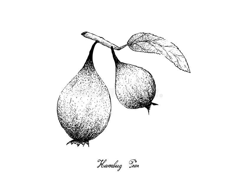 Hand van Humbug-Peren op Witte Achtergrond wordt getrokken die vector illustratie