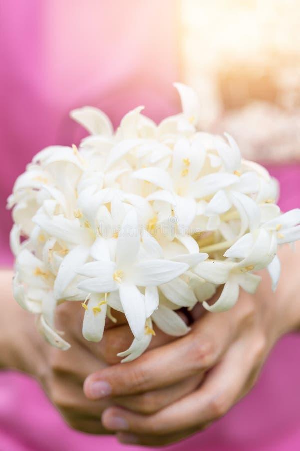 Hand van jongelui die een boeket van jasmijn met zonlicht houden stock afbeeldingen