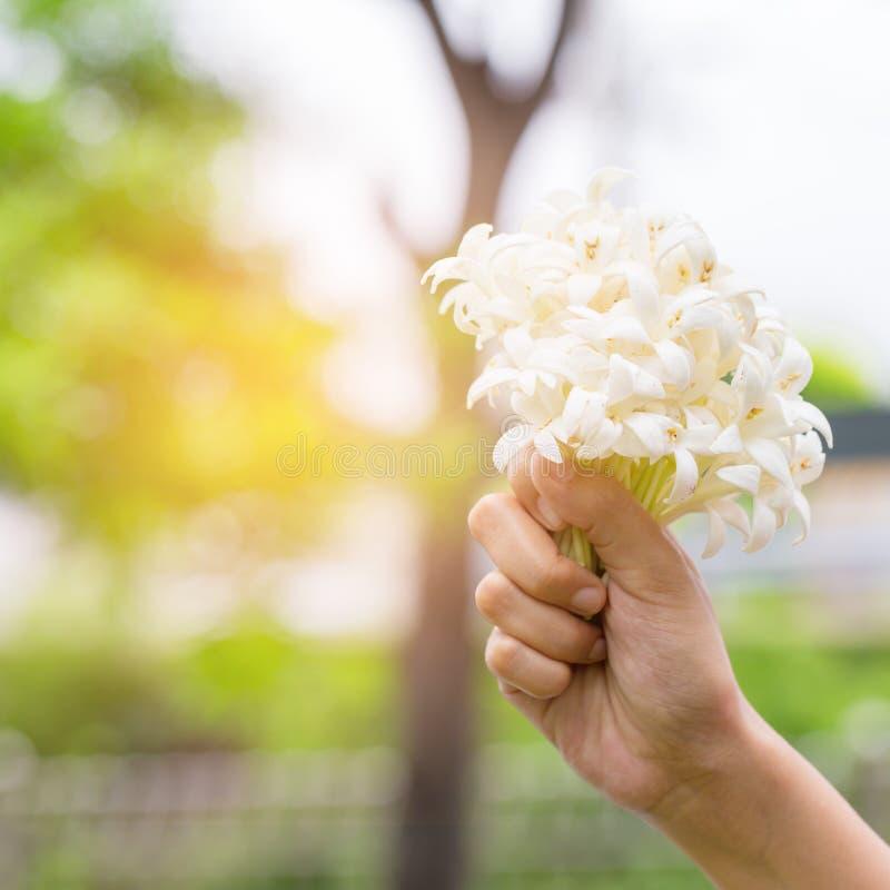 Hand van jongelui die een boeket van jasmijn met zonlicht houden stock afbeelding