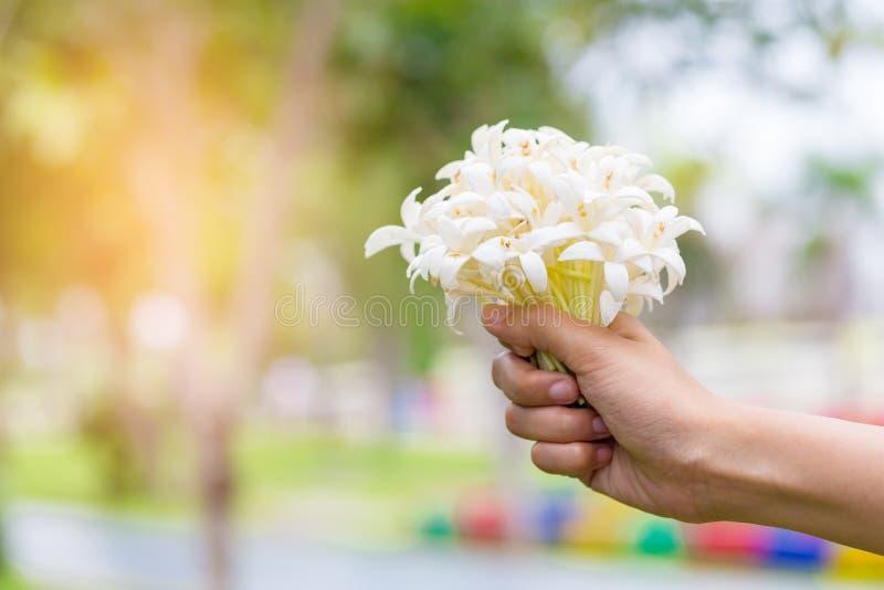 Hand van jongelui die een boeket van jasmijn met zonlicht houden stock fotografie