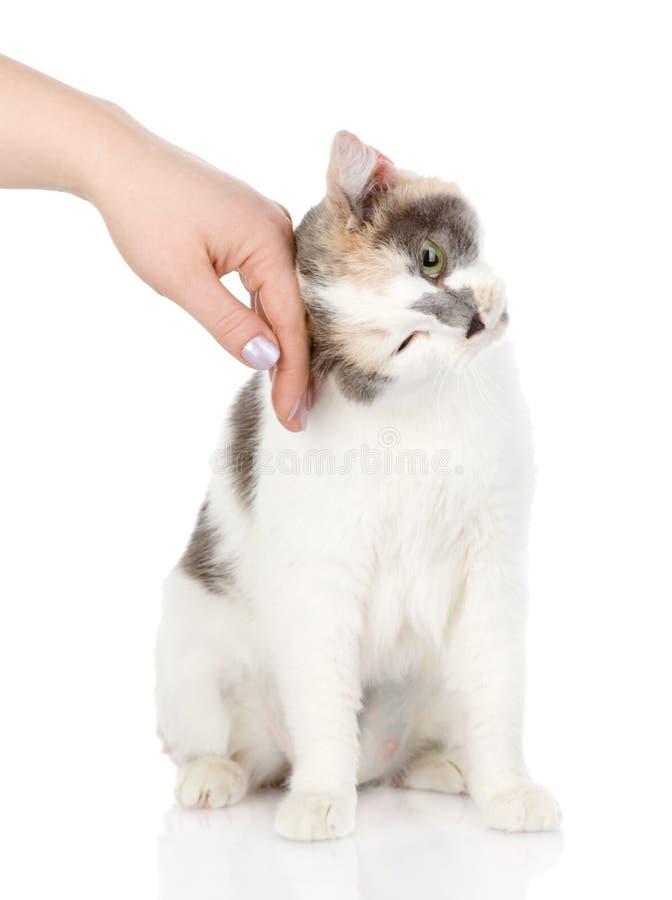 Hand van personen die een kat strijken royalty-vrije stock afbeelding