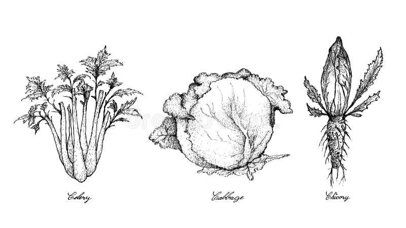 Hand van Selderie, Kool en Witlof wordt getrokken dat stock illustratie