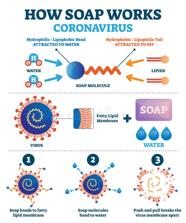 Hand washing with soap to fight coronavirus Covid-19 vector illustration. Educational diagram with explanation how cleaning push and pull breaks virus membrane stock illustration